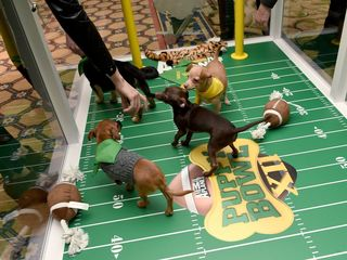 Puppy Bowl XII is just days away