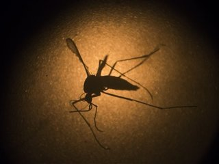 Two cases of Zika virus reported in Omaha area