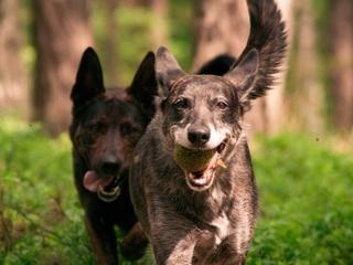 NE Humane Society reduces pet adoption fees