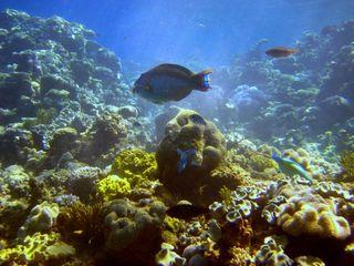 Plastic microfibers found in deep ocean animals