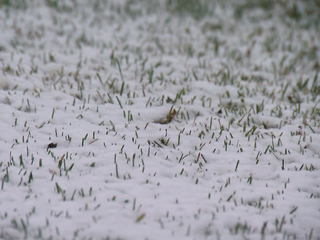 Snow is about to fall in some unlikely places