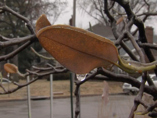 January thaw for most of US