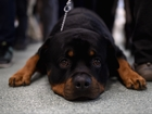 Insurance company holds cutest canine contest