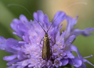 Germany sees drastic decline of insects